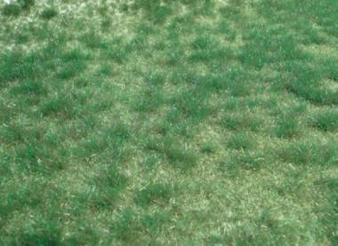 Heki 1843 realistic Wild grass marshy county 45 x 17 cm New